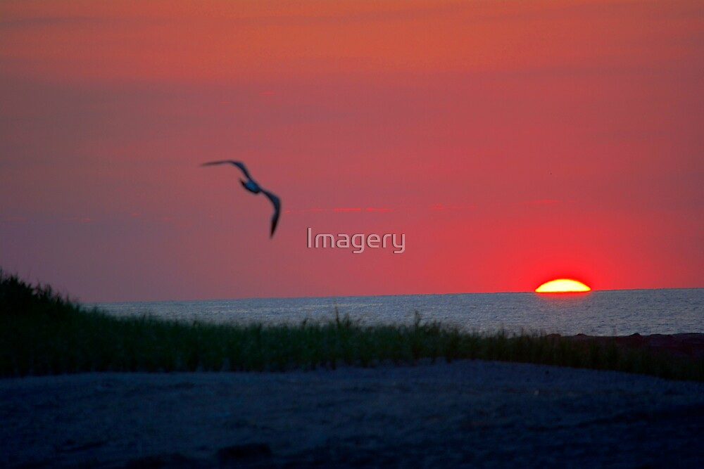 Morning Flight by Imagery