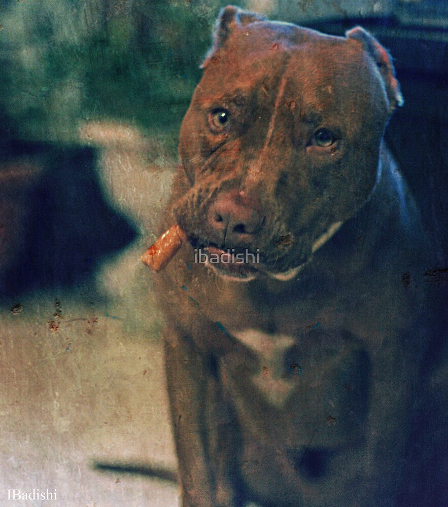Pitbull Dog with a Cigar in his Mouth by ibadishi