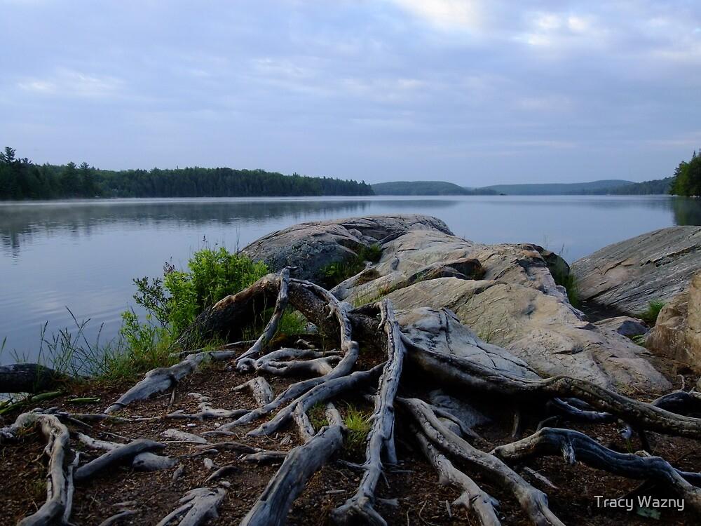 Smoke Lake Shoreline- Algonquin Park Canada by Tracy Wazny