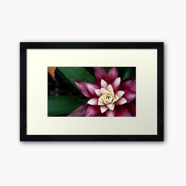 Radiant Hues Framed Art Print