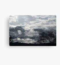 Drive By Trees Canvas Print