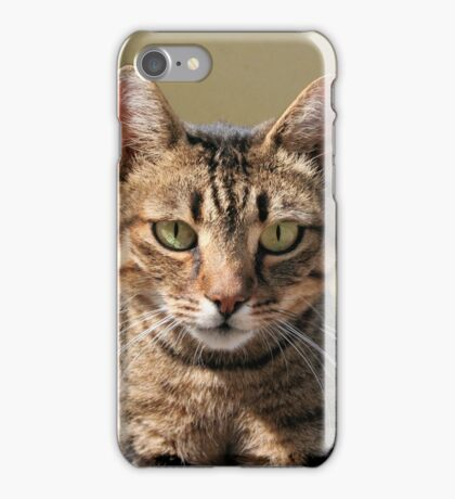 Portrait Of A Cute Tabby Cat With Direct Eye Contact iPhone Case/Skin