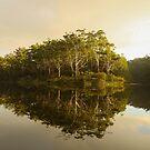 Reflections - Parramatt Lake by Lorraine Creagh