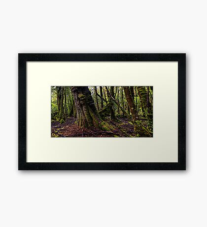 The clearest way to the Universe is through a forest wilderness Framed Print