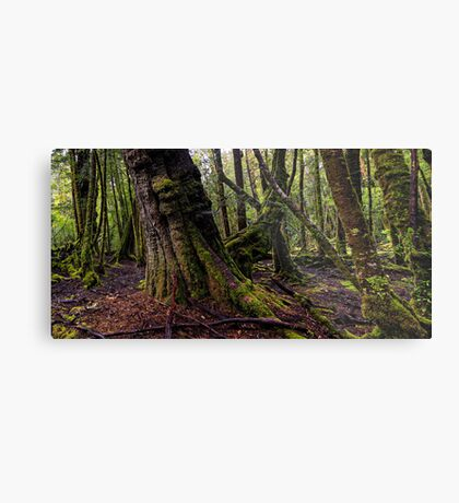 The clearest way to the Universe is through a forest wilderness Metal Print