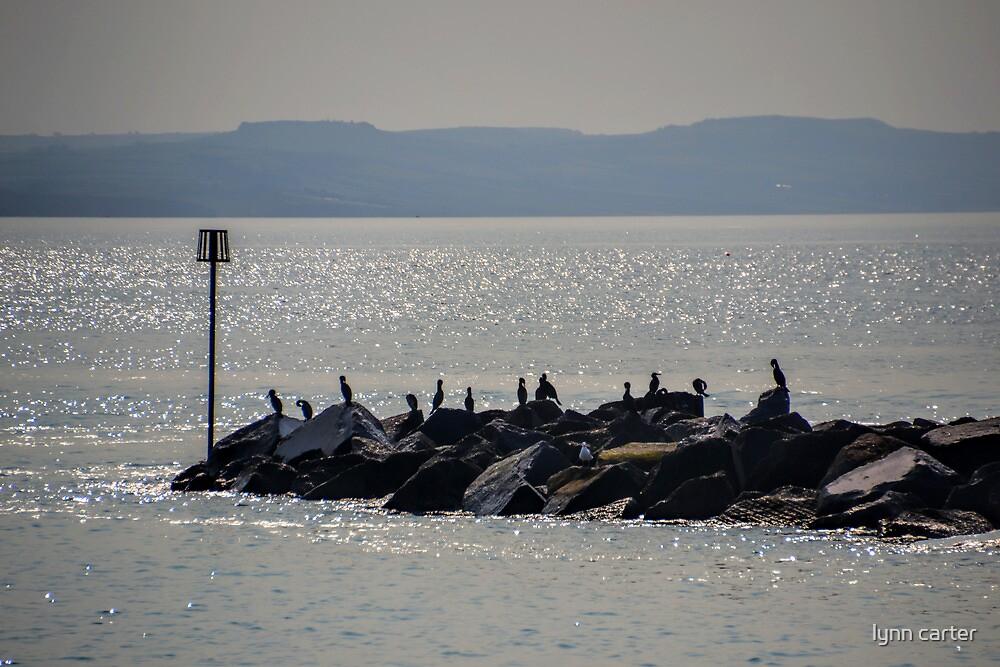 Cormorants On The Rocks At Lyme,Dorset. UK by lynn carter