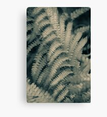 Ferns - simplicity and beauty of nature Canvas Print