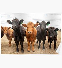 Five Cows Poster