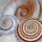 Spirals in the Sand by Sheri Nye