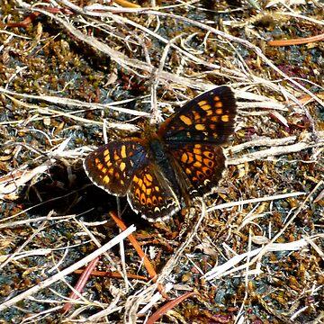 Butterfly 2 by GlockGirl40