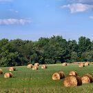 Harvest Time by Sheri Nye