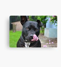 Goober in mid nose lick Canvas Print