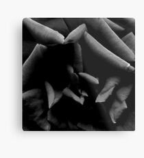 Black & White Abstract Rose Metal Print