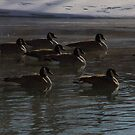 All my geese in a row by ionclad