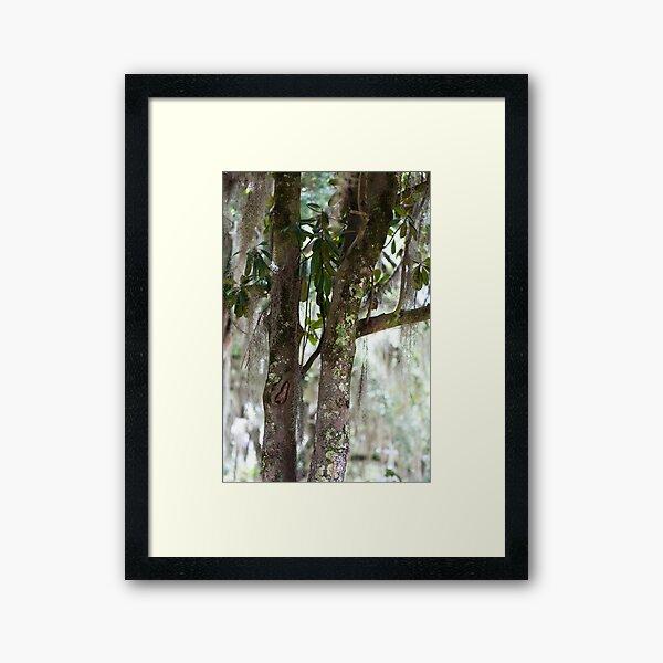 Spanish Moss Framed Art Print
