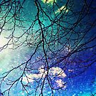 Night Sky by SylviaCook