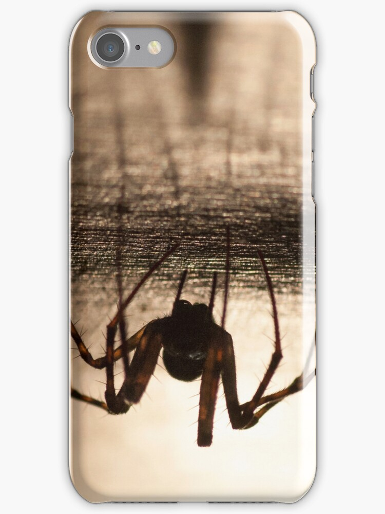 Spider natural by Mats Gustafsson