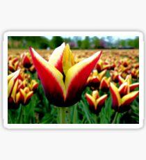 Tulip, Tulip, Tulips Sticker