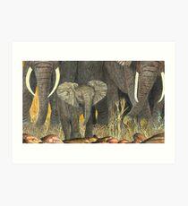 Samburu Elephant Youngster Art Print
