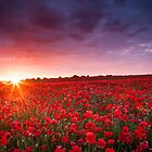 A New Dawn by Gerard Charnley