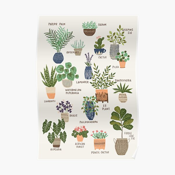 House Plant Chart Poster