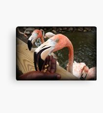 Eager Eaters Canvas Print