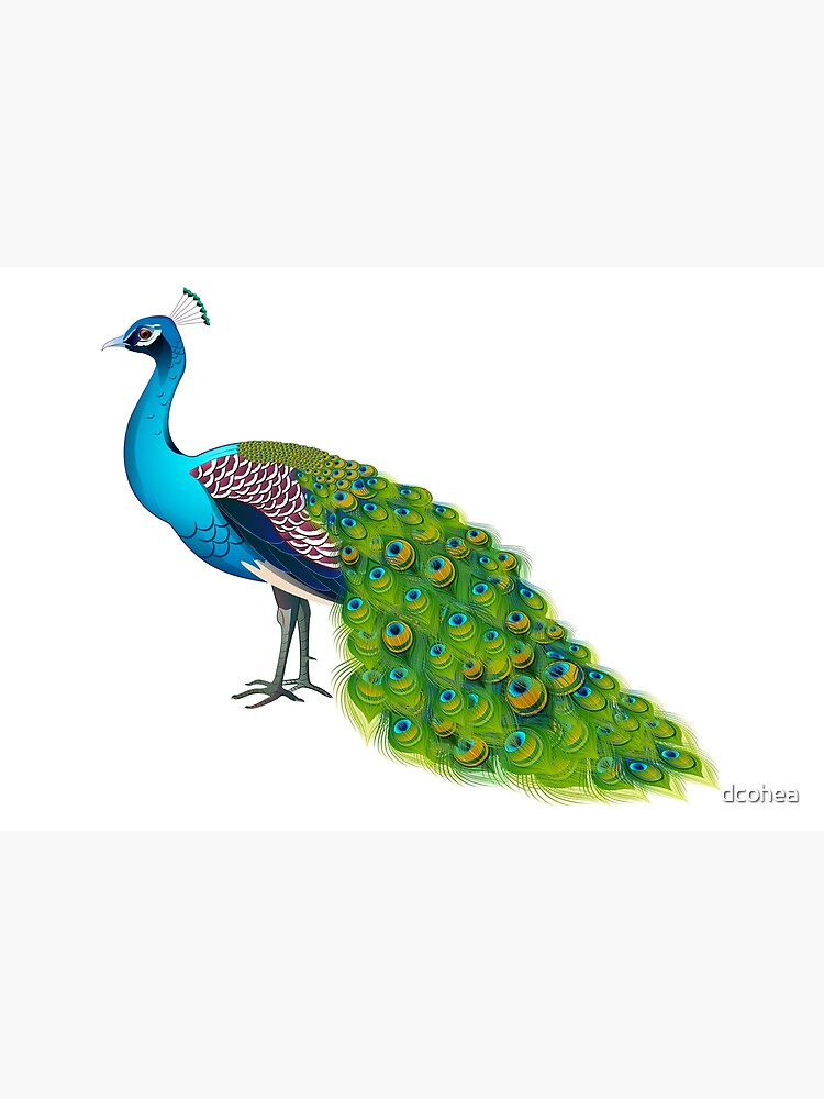 Teal Peacock Graphic by dcohea