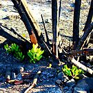 new life after fire by Tim Horton