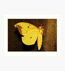 Yellow Moth Art Print
