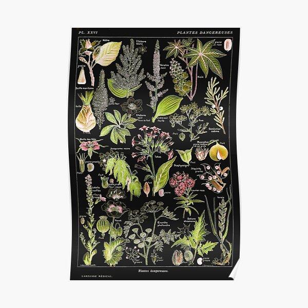 Adolphe Millot - Plantes dangereuses A (dangerous plants A) Poster