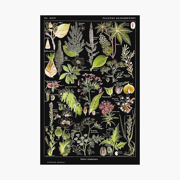 Adolphe Millot - Plantes dangereuses A (dangerous plants A) Photographic Print