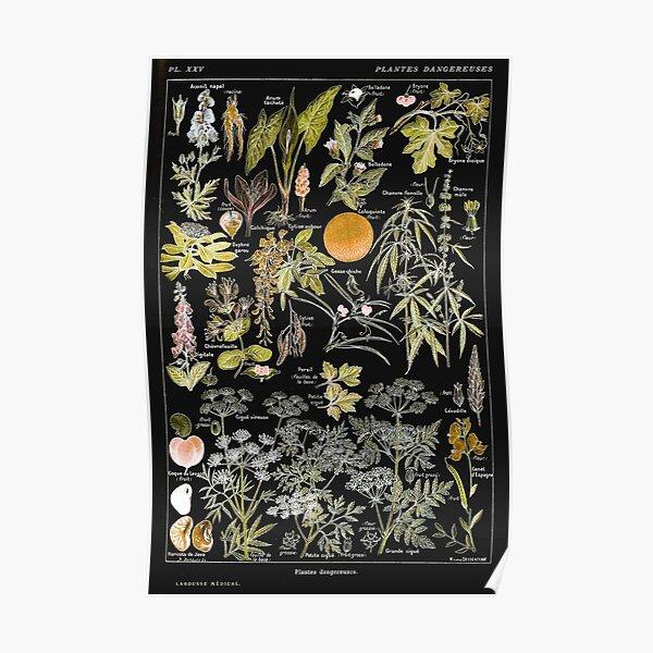 Adolphe Millot - Plantes dangereuses B (dangerous plants B) Poster