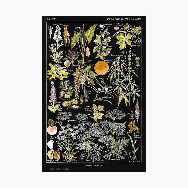 Adolphe Millot - Plantes dangereuses B (dangerous plants B) Photographic Print