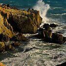 Wave on Rocks by Barbara  Brown