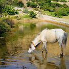 Beautiful Mountain Horse by sajal maskey