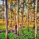 Eucalyptus Dreaming by Luke Griffin