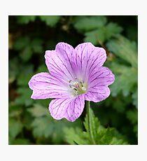 Purple Veins Photographic Print