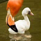 Flamingo Chick by Widcat