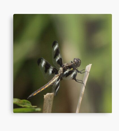 Dragonfly Reads Morning Newspaper Metal Print