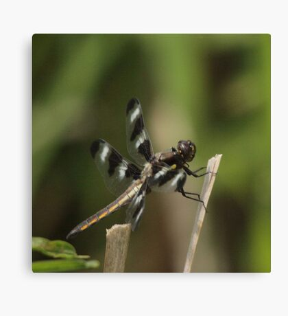Dragonfly Reads Morning Newspaper Canvas Print