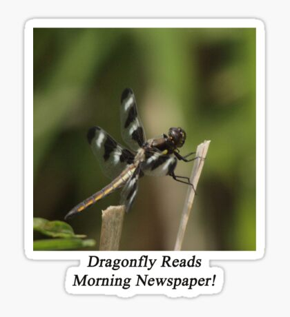 Dragonfly Reads Morning Newspaper Sticker