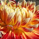 ORANGE DAHLIA Flowers Art Prints Summer Floral by BasleeArtPrints