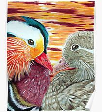 Mandarin Ducks in Love Poster
