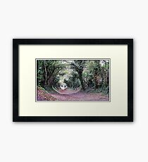 Went back to the Tunnel of Trees Framed Print