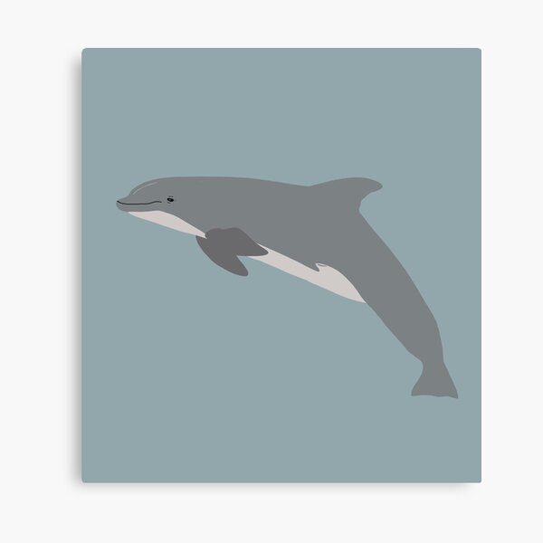 Griffith the bottlenose dolphin Canvas Print