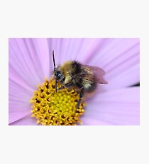 Bumble Bee Macro Photographic Print