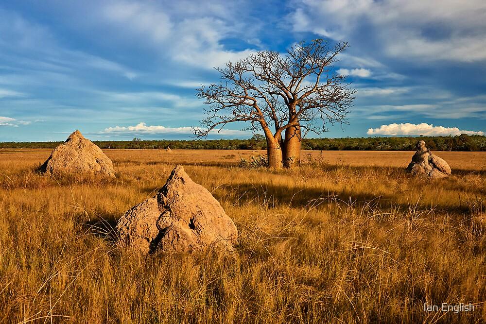 Ant Nest Sentinels - Kimberley WA by Ian English
