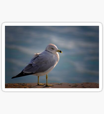 Gull Sticker