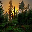 Rise And Shine by Charles & Patricia   Harkins ~ Picture Oregon