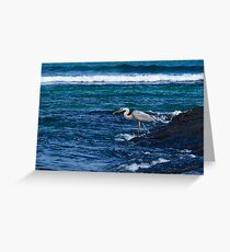 Great Blue Heron in the Galapagos feeding on Baby Iguana Greeting Card